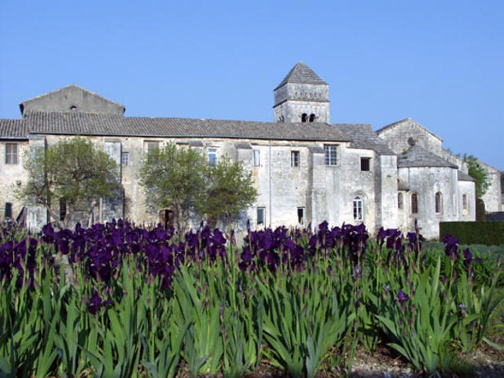 Монастырь Сен-Поль-де-Мозоль - ирисы