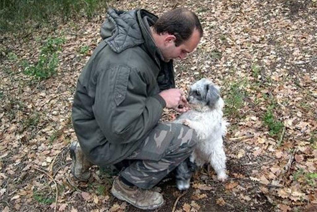 Профессиональный охотник на трюфели