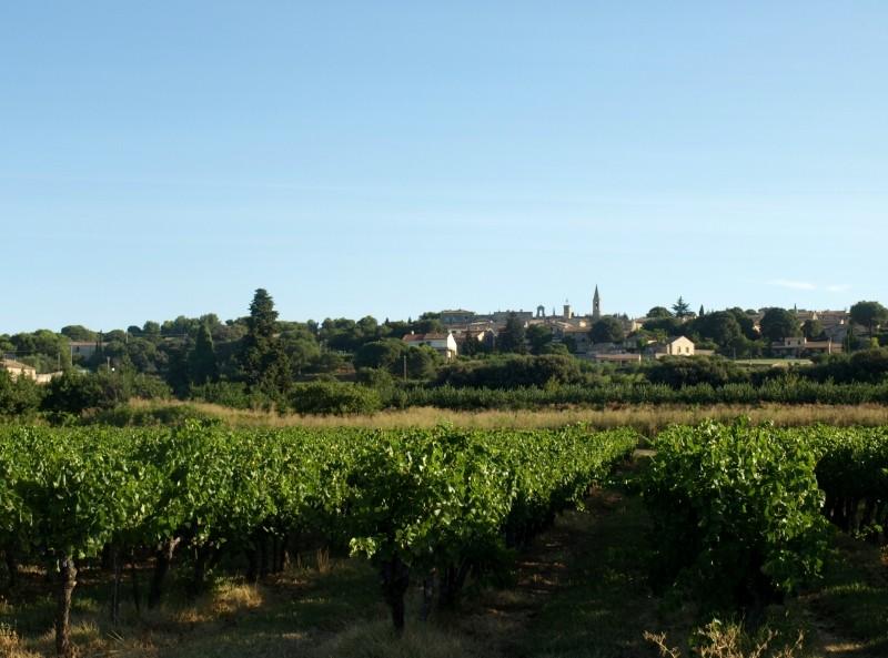 Виноградники Сен-Реми-де-Прованс