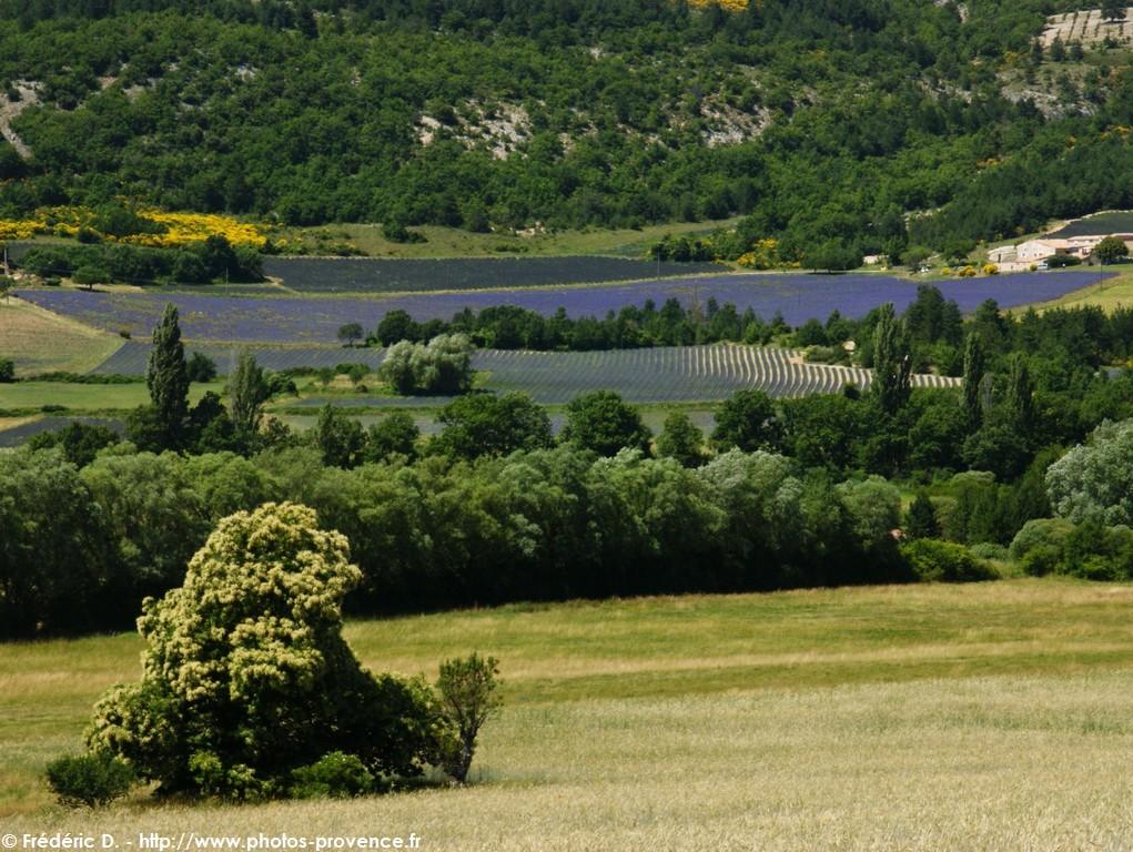 Лавандовые поля между деревушкой Солт и горой Мон-Ванту