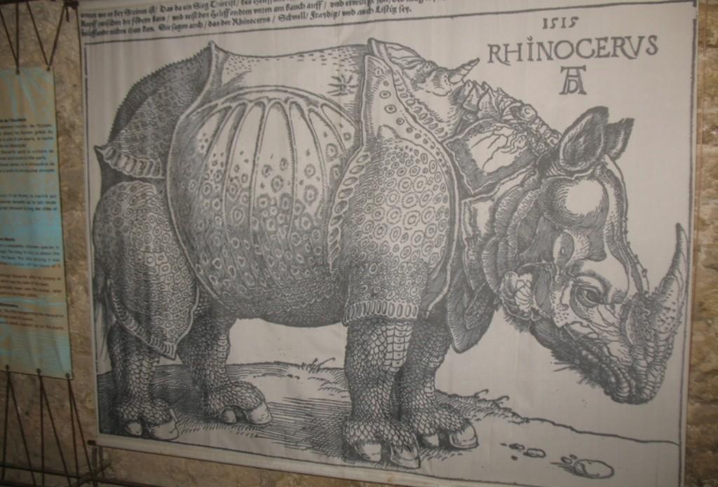 Как связан носорог с замком Иф?