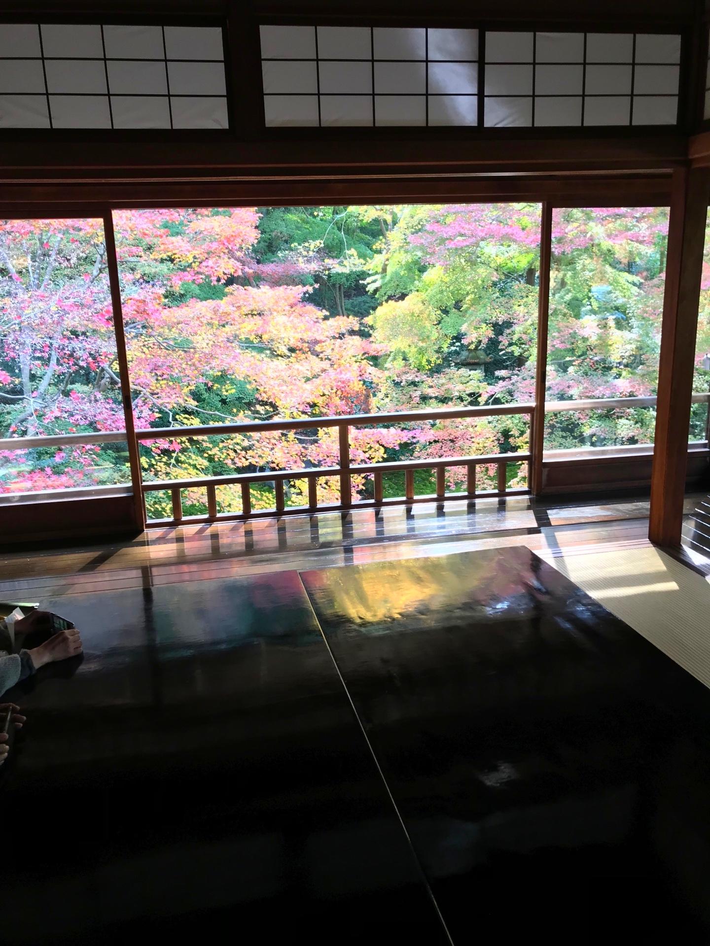 2階からの眺めと机に映るモミジ