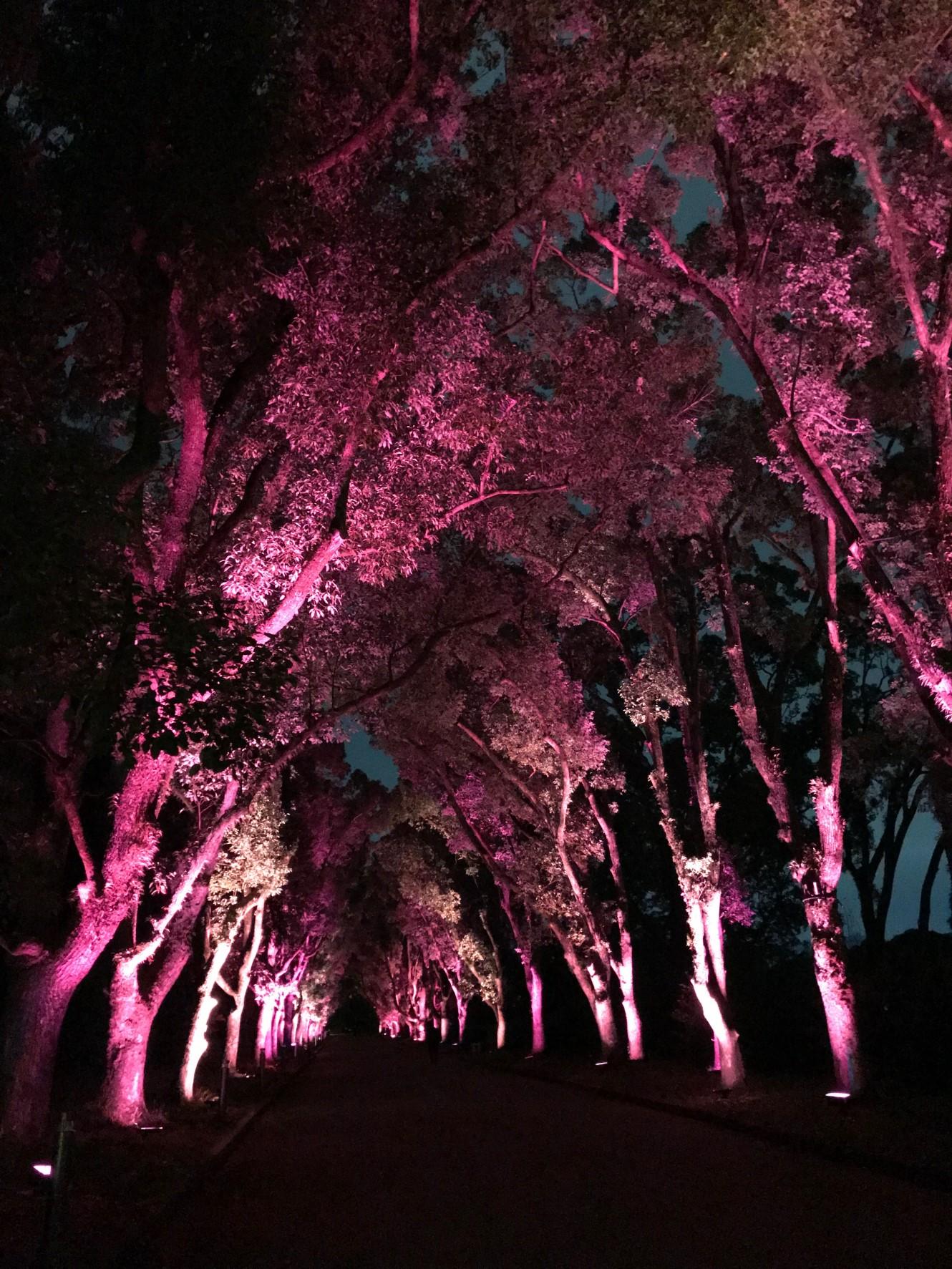 くすのきの並木 開園当初に植えられた樹齢115年
