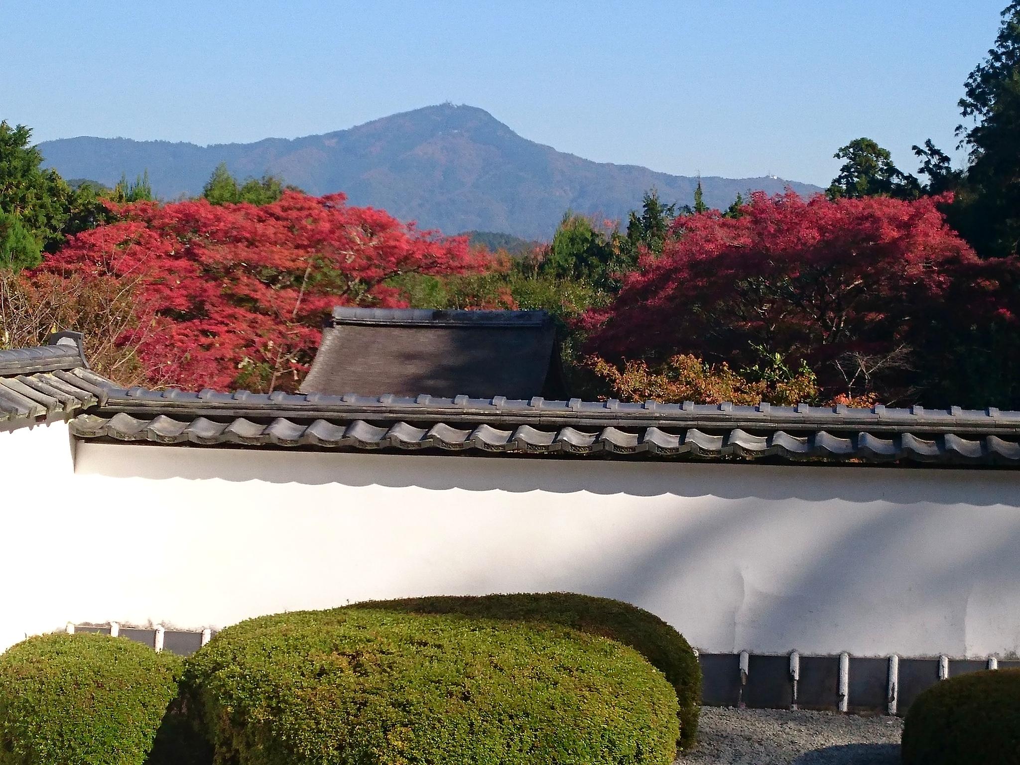 正伝寺比叡山借景