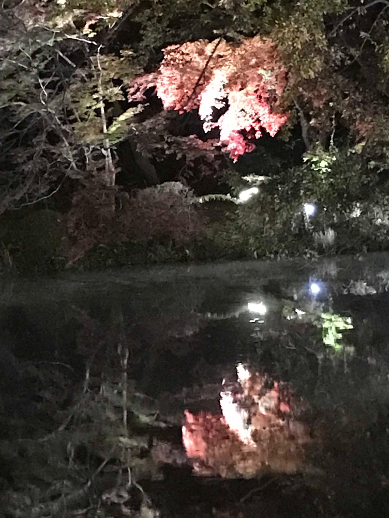なからぎの森にある池