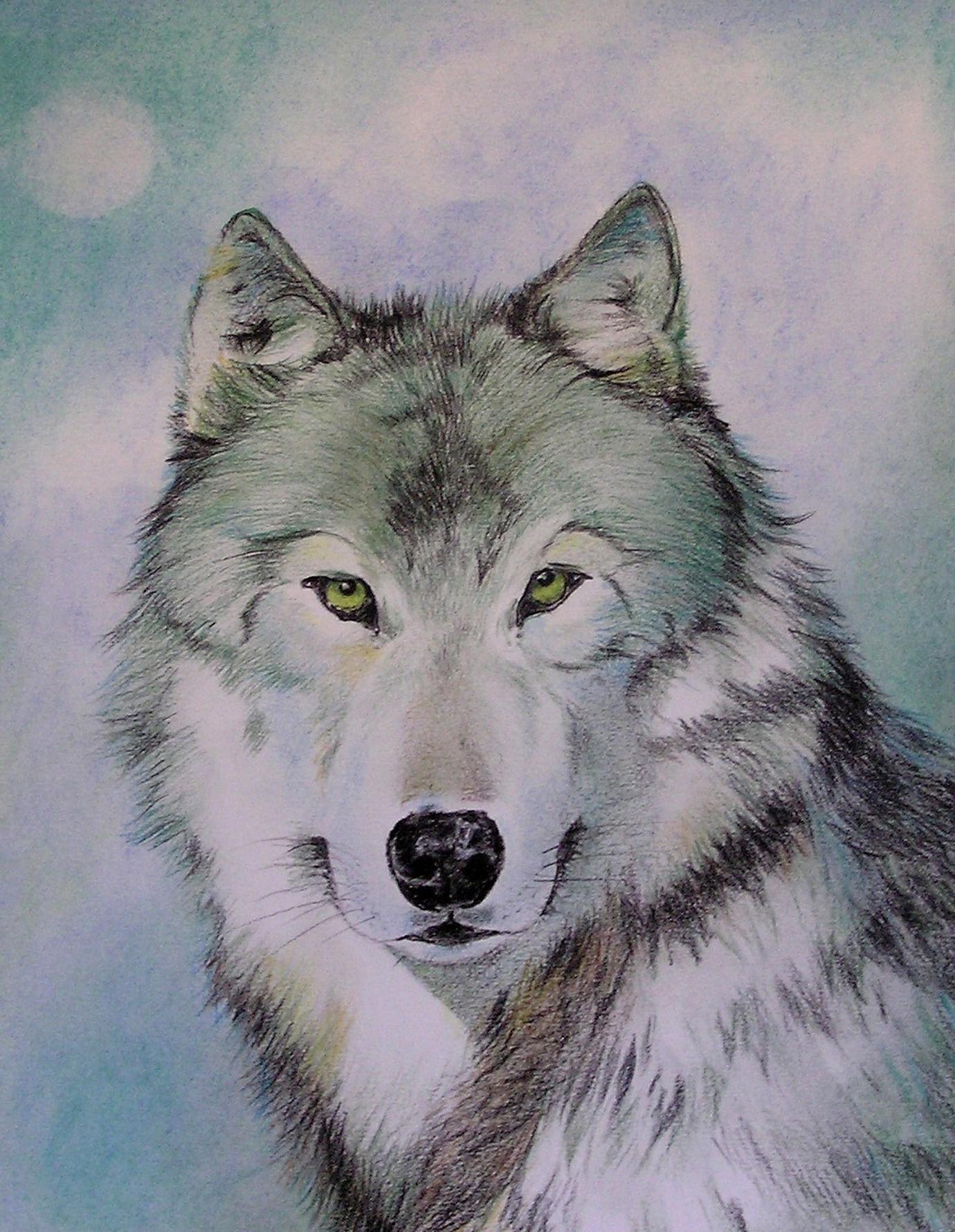 Winterwolf / Frabstift und Pastell / 40 x 50 cm