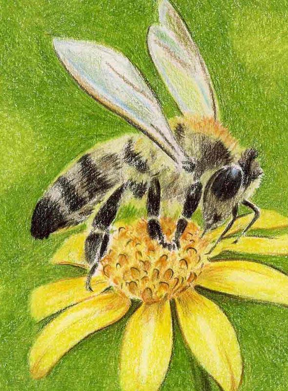 Etikett Nochen Honig