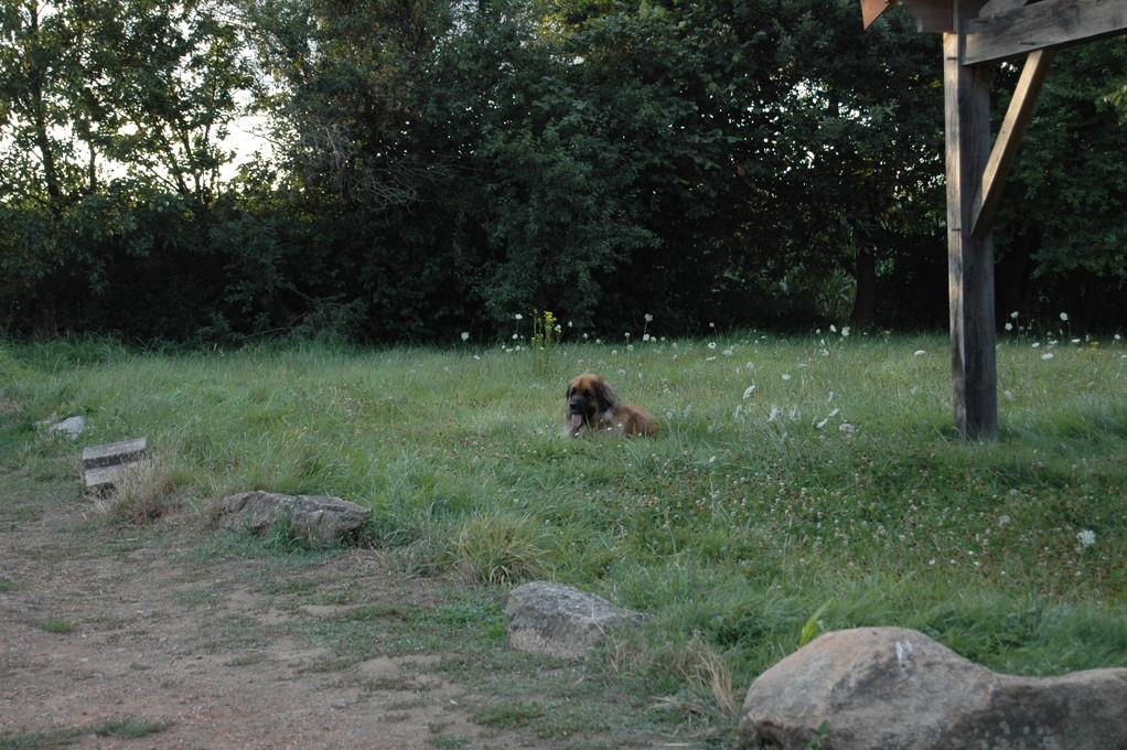 Une petite sieste dans l'herbe, le pied!!