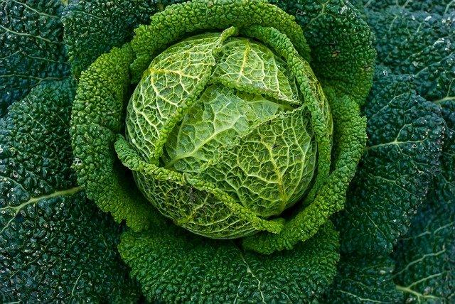 Wie wir unser Immunsystem stärken mit leckerer Gemüseküche: Zum Beispiel mit einer Wirsing-Quiche