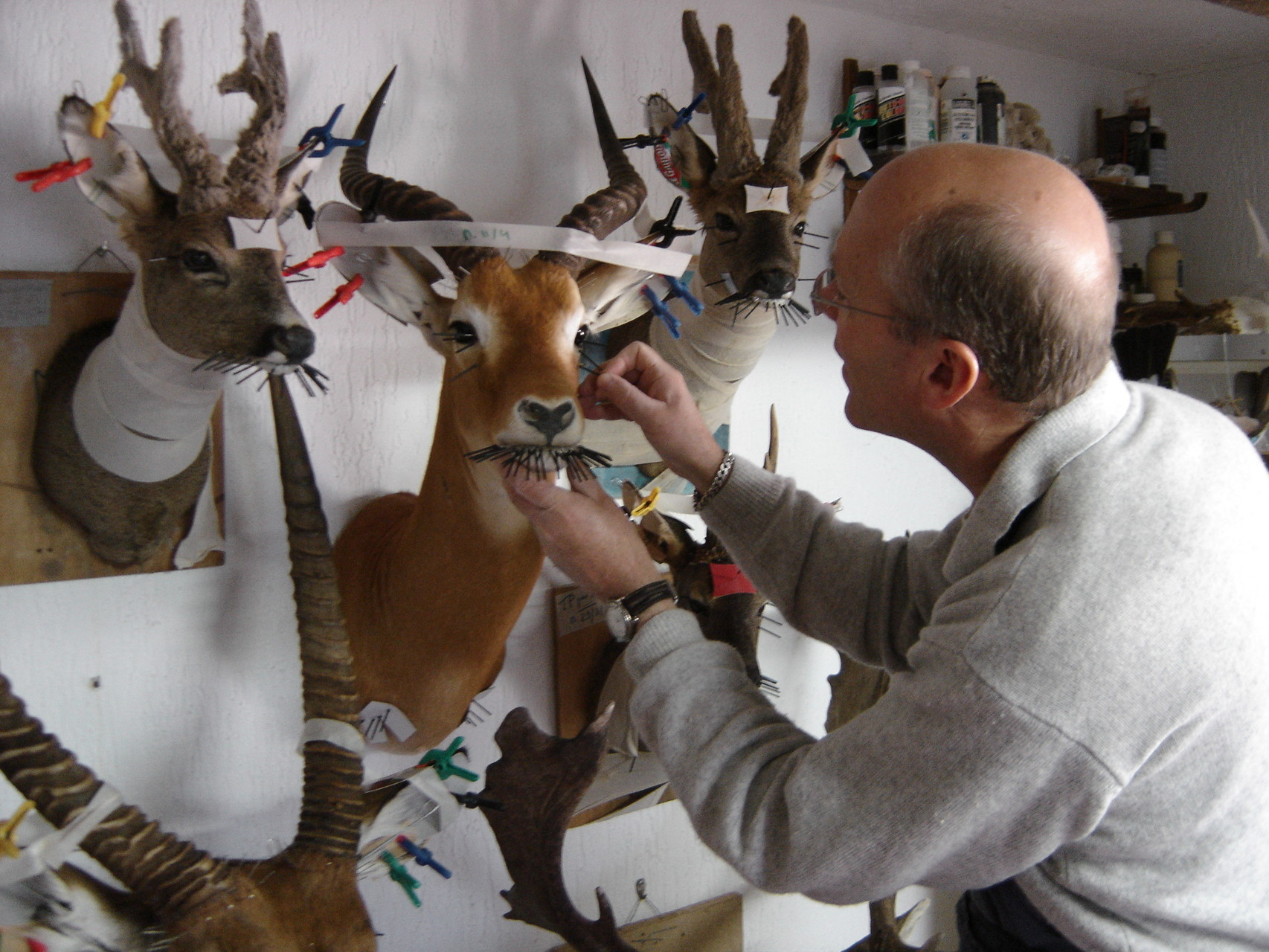 taxidermiste 94