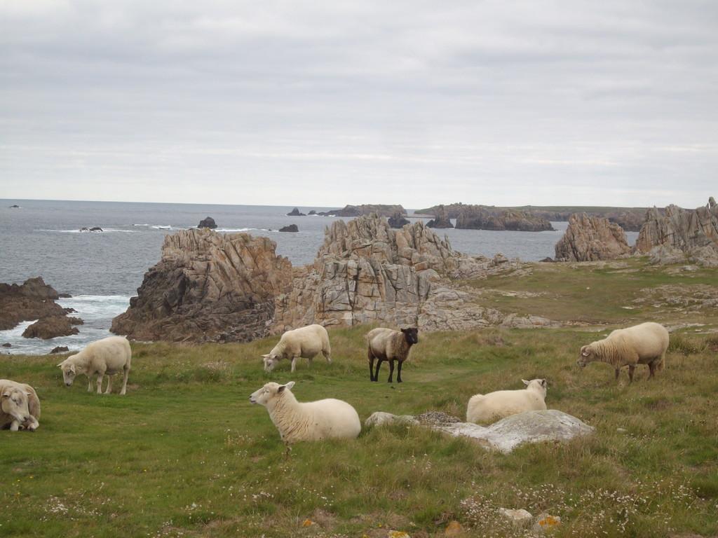 Accompagnement de groupe en Irlande