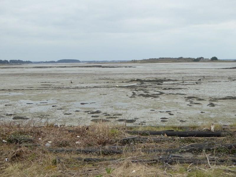 Découverte milieu marin