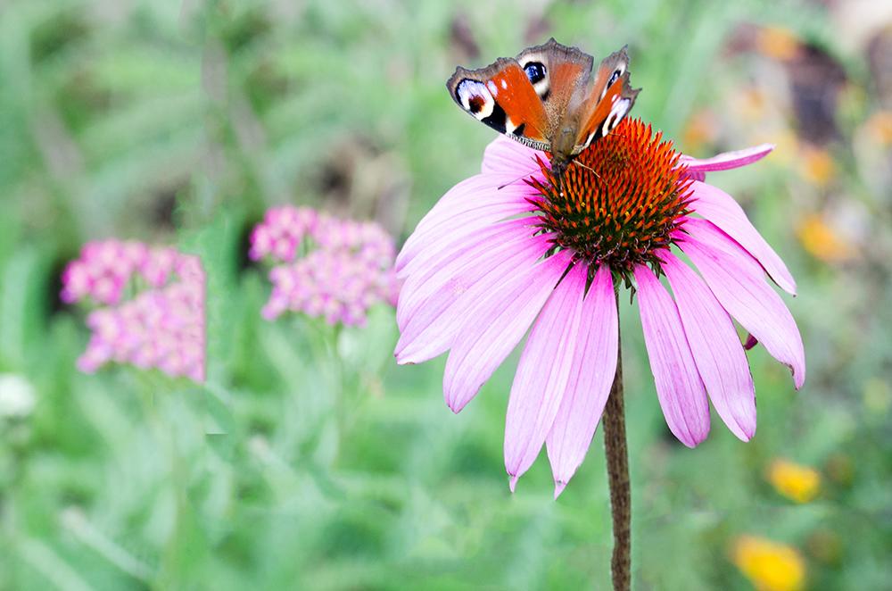 Leinwandbild Schmetterling