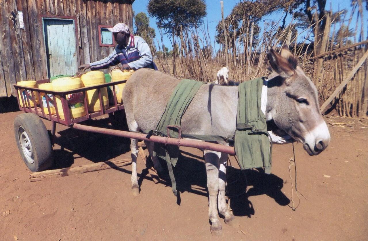 Wassertransport mit Esel und Wagen bei der Enduet Frauengruppe