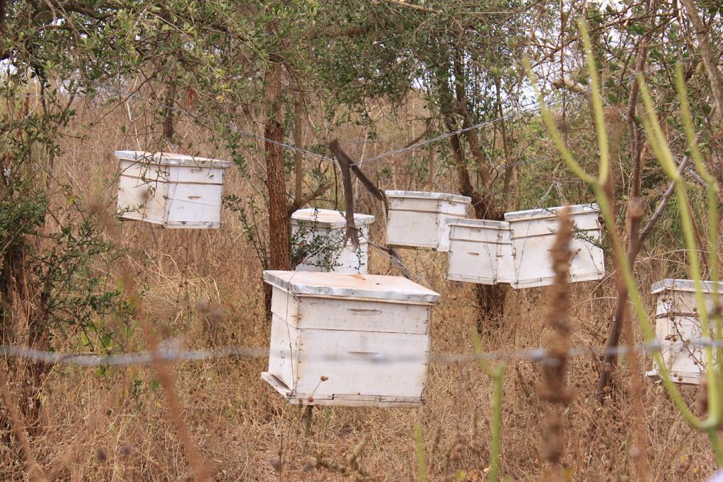 Mit dem Erlös aus der Baumschule konnte die Gruppe 10 Bienenstöcke kaufen