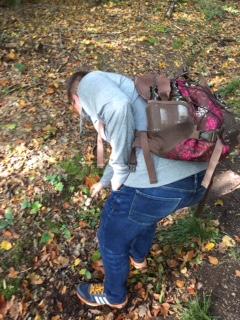 Mühselige Pilzsuche im Wald...