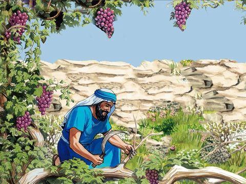 Jésus-Christ est la vraie vigne, le vrai cep. « Le sceptre ne s'écartera pas de Juda » : le futur Roi, le Messie tant attendu est bien de la tribu de Juda ; « jusqu'à ce que vienne celui auquel il appartient et à qui les peuples doivent obéissance »