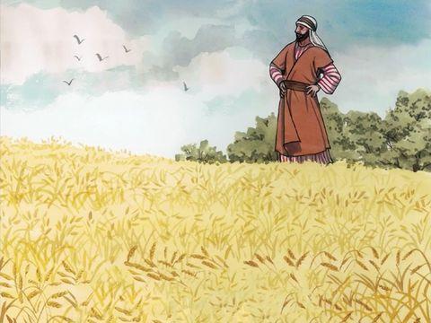 La moisson de la Terre, le maitre de la moisson, Jésus-Christ va commencer la récolte du bon blé: les fidèles chrétiens