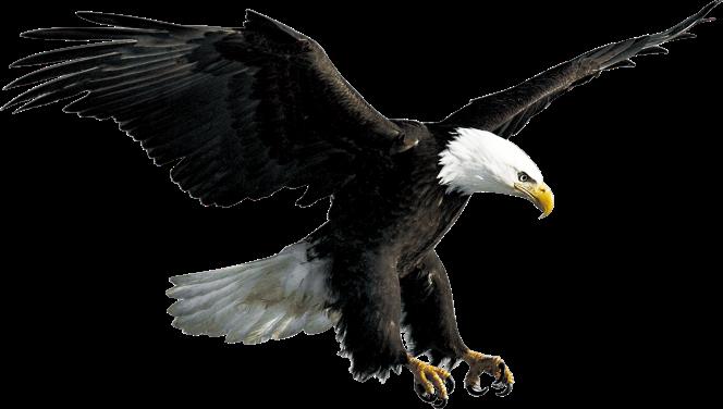 L'aigle a souvent été choisi comme symbole d'Empires et de nations. Dans le domaine militaire, l'aigle est l'emblème de corps d'élite comme les aviateurs. C'est aussi l'un des 4 attributs de Dieu.