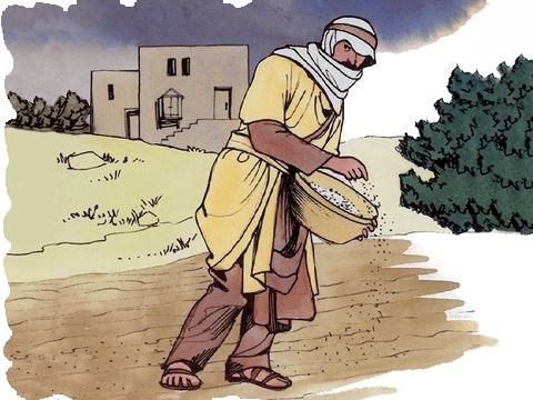 La parabole de Jésus sur le blé et la mauvaise herbe : Alors que du bon blé a été semé dans un champ, un ennemi vient, pendant la nuit, semer de la mauvaise herbe par dessus le blé. En poussant, le blé se trouve mêlé à la mauvaise herbe.