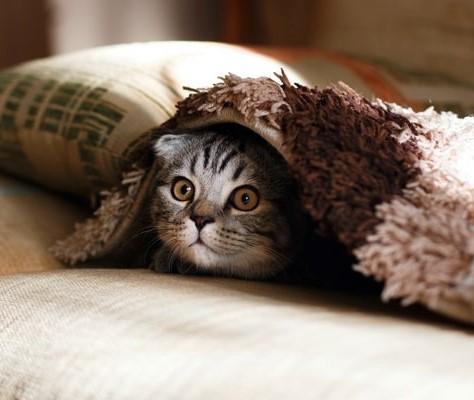 L'humour est de plus en plus rare dans notre monde bâillonné.  Observons les chatons, les chiots et tous les animaux de la création pour retrouver le sentiment de liberté et pour rire!