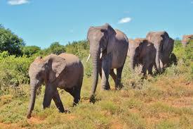 Dieu promet un paradis terrestre qui protègera la biodiversité de notre planète et le respect de notre environnement.
