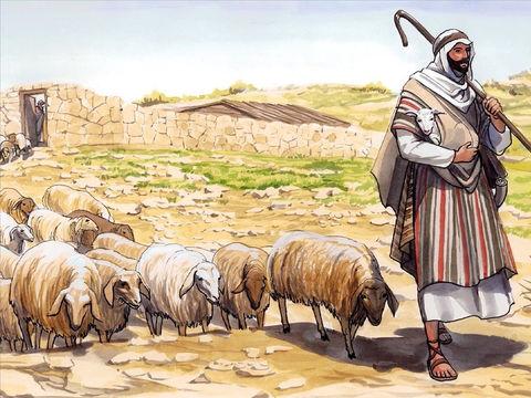 Jésus est le bon berger. Il est la porte de l'enclos des brebis. Ses brebis le suivent et écoutent sa voix.