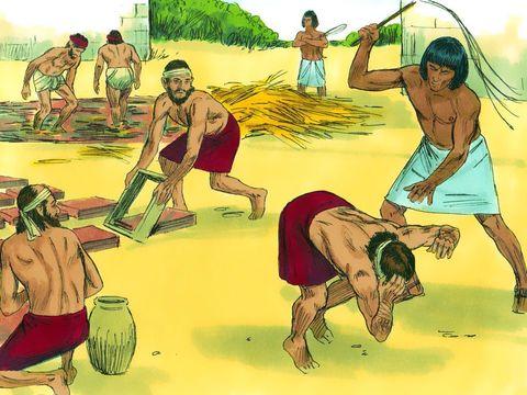 Les herbes amères représentaient la vie amère que les Israélites avaient vécue en esclavage. et leur rendirent la vie amère par de rudes corvées : fabrication de mortier, confection de briques, travaux en tous genres dans les champs.