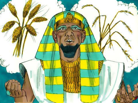 Jéhovah Dieu envoie à pharaon une vision prophétique dans laquelle 7 vaches grasses se font manger par 7 vaches maigres, également 7 épis pleins et beaux se font engloutir par 7 épis vides, maigres, brûlés par le vent. Joseph interprète le rêve de pharaon
