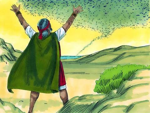 Lors de la 8e plaie d'Egypte, Moïse fait venir les sauterelles grâce à un vent d'Est. Les sauterelles dévorent les cultures.