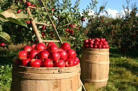 Le fruit des récoltes symbolise les chrétiens qui ont été symboliquement plantés, arrosés, moissonnés. A son retour, le Christ dirigera la moisson de la terre réalisée par les anges.