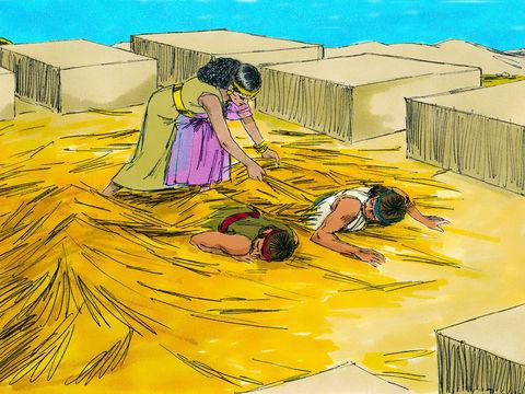C'est sous des tiges de lin que les deux espions ont été cachés par Rahab, la prostituée de Jéricho.