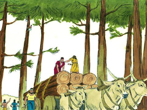 Salomon dispose de 30'000 hommes de corvée envoyés au Liban, de 70'000 hommes pour porter des fardeaux, de 80'000 hommes pour tailler les pierres dans la montagne.