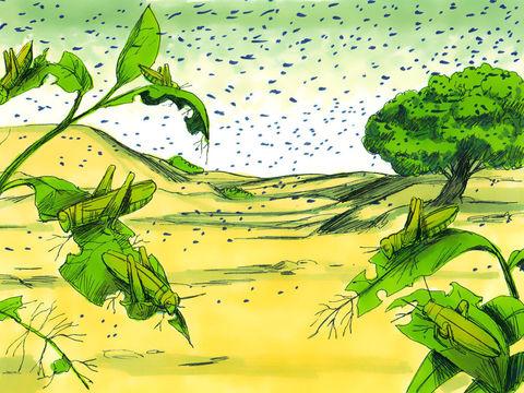 """Les sauterelles dévorent toutes les cultures qui n'ont pas été détruites par la grêle lors de la 7ème plaie. Et Jéhovah fit souffler un vent contraire, un vent (rouah) d'occident très fort, qui emporta les sauterelles et les poussa dans la mer Rouge."""""""