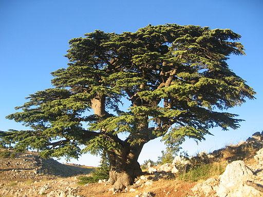 L'Assyrie était un puissant empire avant d'être renversé par Babylone. Dieu le compare à un cèdre du Liban. La grandeur et la beauté de cet arbre illustre l'orgueil des rois d'Assyrie. Les plus hauts arbres représentent les dirigeants les plus orgueilleux