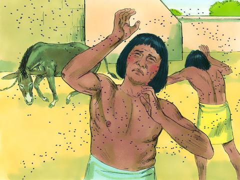 Dieu a envoyé 10 fléaux (ou 10 plaies) au pharaon d'Egypte afin qu'il laisse partir les Israélites alors en esclavage. L'eau transformée en sang, les grenouilles, les moustiques, les mouches piquantes ou taons...