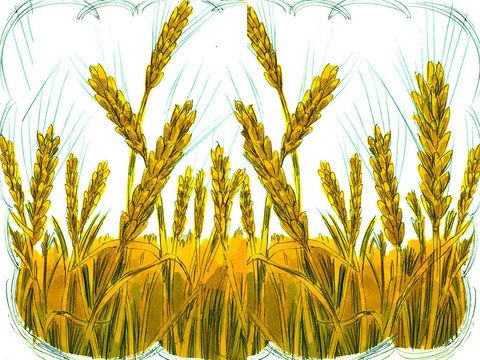 La moisson de la Terre est grande mais les ouvriers sont peu nombreux. Les anges seront les moissonneurs de la terre. Les gens seront séparés en 2 catégories: les brebis et les chèvres, le blé et la mauvaise herbe.