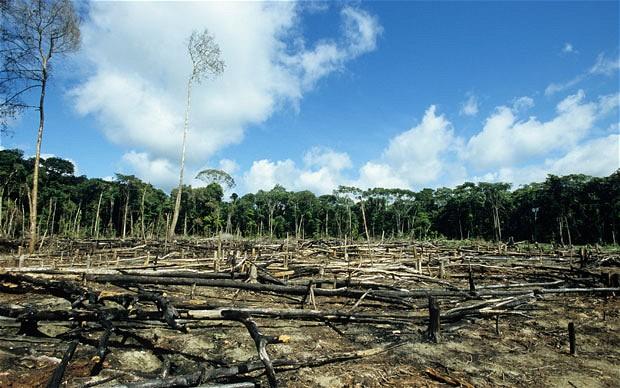 Parmi les dégâts causés par l'avidité de l'homme, citons la déforestation, la disparition de nombreuses espèces animales et végétales, la pollution des sols et des cours d'eau, l'accumulation de déchets, l'épuisement des ressources naturelles, braconnage.