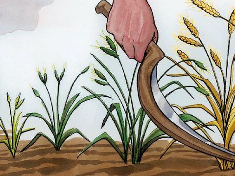 Dans la parabole du blé et de la mauvaise herbe de Jésus, les anges jouent le rôle des moissonneurs. Il vont récolter le bon blé qui sont les chrétiens fidèles et brûler la mauvaise herbe.