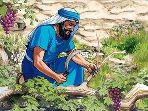 Jésus est « le vrai cep, le vrai cep de vigne, la vraie vigne ». Et son Père est le vigneron.
