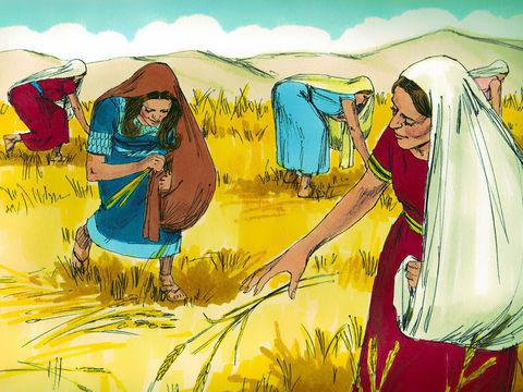 Ruth travaillait dur dans les champs. Elle travaillait à la sueur de son front. Le front dans la Bible.