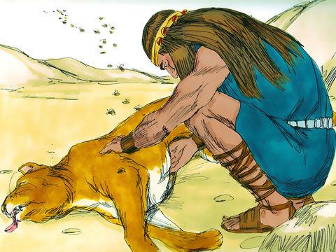Samson tue un lion à mains nues. Quelque temps après un essaim d'abeilles s'installe dans le corps du lion. De là Samson invente une énigme qui allait causer bien des ravages.