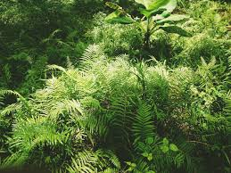 Au cours de ce 3ème jour, apparaît la terre ferme et la végétation. Grâce à la lumière apparue au cours du premier jour et à la vapeur d'eau et à l'atmosphère apparues au deuxième jour, les végétaux chlorophylliens autotrophes vont pouvoir proliférer.