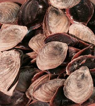L'opercule du coquillage d'un mollusque, le strombe ressemble à un ongle ; un parfum s'en exhale par la combustion. L'ongle odorant entre dans la composition du parfum odoriférant offert à Jéhovah sur l'autel des parfums par le grand-prêtre.