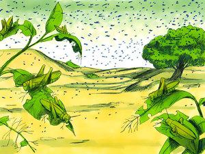 Lors de la 8ème plaie d'Egypte, le pays est ravagé par des nuées de sauterelles (criquets) en très grand nombre qui ont dévoré toute l'herbe, tous les fruits, toute la végétation. Il ne restera plus rien. Le pays d'Egypte est totalement dévasté.