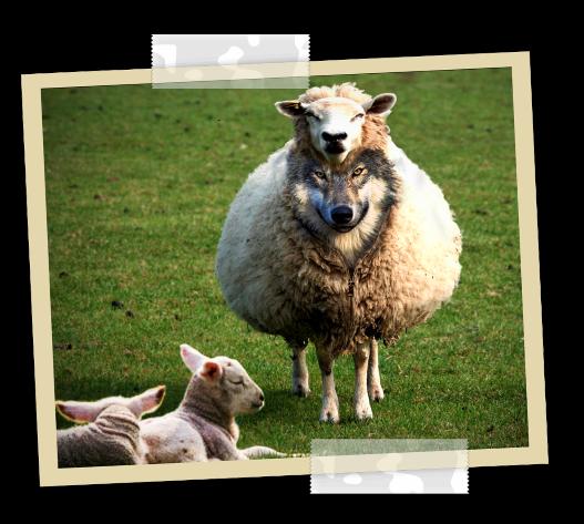 Méfiez-vous des prétendus prophètes! Ils viennent à vous en vêtements de brebis, mais au-dedans ce sont des loups voraces. Tout comme son père Satan le diable, le père du mensonge, la bête se transforme en ange de lumière et séduit tout le monde.