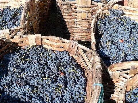 Lorsque les raisins seront mûrs, des anges se chargeront de vendanger les grappes de la vigne de la terre. La vendange sera versée dans la grande cuve de l'ardente colère du Tout-Puissant. Du sang en grande quantité en sortira.