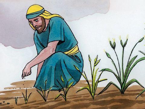 Parabole de Jésus la graine de moutarde