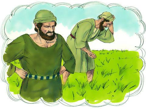 Le bon blé se retrouve mêlé à la mauvaise herbe. Laissez l'un et l'autre pousser ensemble jusqu'à la moisson et, au moment de la moisson, je dirai aux moissonneurs: Arrachez d'abord la mauvaise herbe pour la brûler, mais récoltez le bon blé.