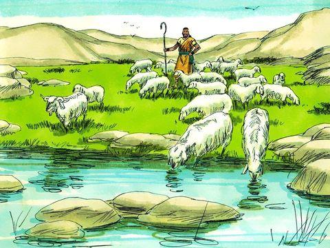 Tout jeune, David est berger et s'inspire de la nature pour composer déjà des chants et des louanges à Jéhovah Dieu. Il joue admirablement de la harpe au point qu'il est recommandé au roi Saül qui le prend à son service.